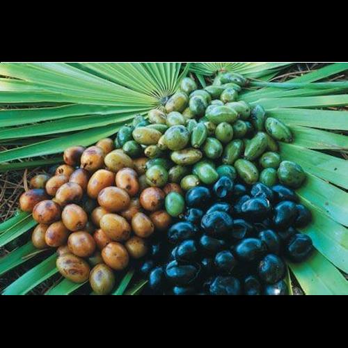 от плодовете на палма джудже 2